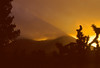 Sunrise, Walker Pass<br /> Sequoia National Forest, Tulare Co., CA  4/17/94