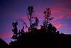 Sunset.  Evolution Lake.<br /> Kings Canyon National Park, Fresno Co., CA 8/12/99