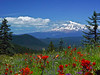 Mt. Adams from Huckleberry Mountain, WA 7/7/05