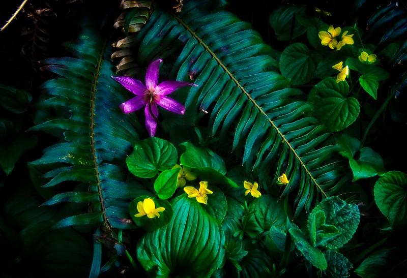 Flower arrangement on Neahkahnie Mt trail - Oregon Coast.<br /> Photo © Carl Clark