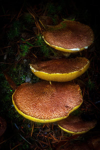 October and November are prime months to see mushrooms in the forests along the Oregon Coast.<br /> Photo © Cindy Clark