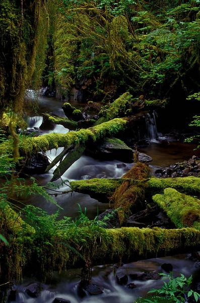 Munson Creek Falls, Oregon.<br /> Photo © Cindy Clark