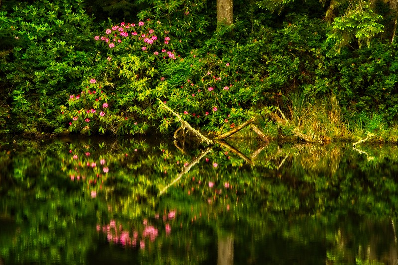 Inland near the Oregon Coast.<br /> Photo © Carl Clark