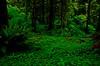 Deep forest at Cascade Head - Oregon Coast.<br /> Photo © Carl Clark