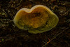I know it looks like a jelly fish, but this is a mushroom growing under a downed tree trunk.<br /> Photo © Cindy Clark