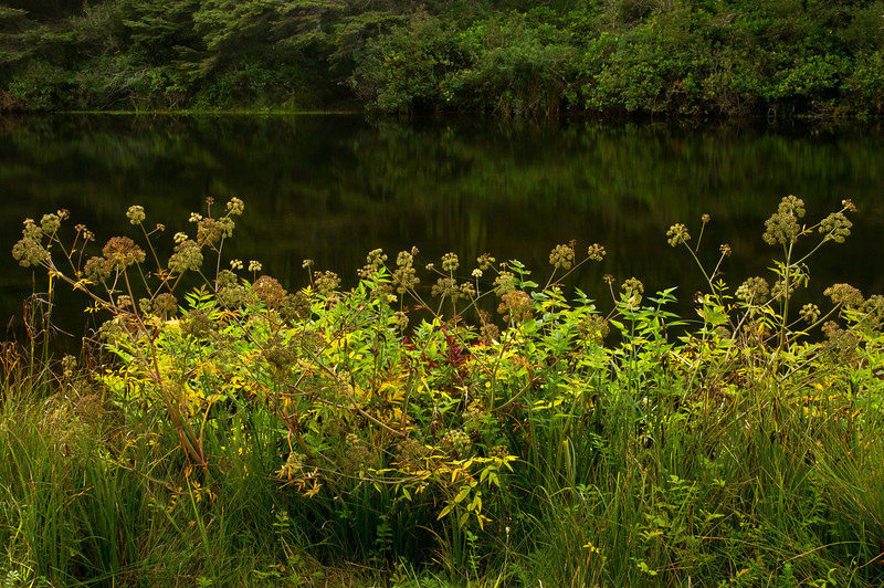 Bright foliage contrasts with very still waters in Beaver Creek, Ona Beach Park.<br /> Photo © Cindy Clark