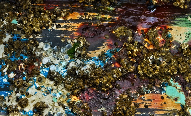 Barnacles & limpets cover an old rusted sign on a Whidbey Island beach.<br /> Photo © Cindy Clark