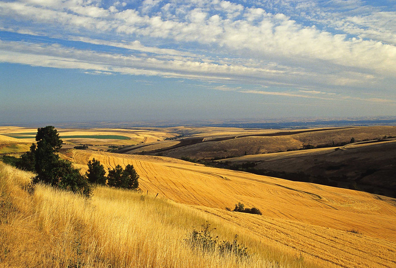 Morning sun lights up a field in northeastern Oregon.<br /> Photo by Cindy Clark