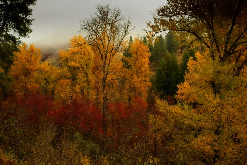 We encountered spectacular autumn colors in our trip through the Wallowa mountains.<br /> Photo © Cindy Clark