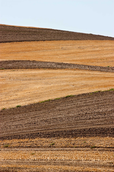 Wheat field forms on the hills of The Palouse in Washington.<br /> Photo © Carl Clark