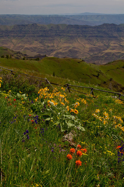 Summer blossoms with Hell's Canyon backdrop at the Buckhorn Overlook in Oregon.<br /> Photo © Carl Clark