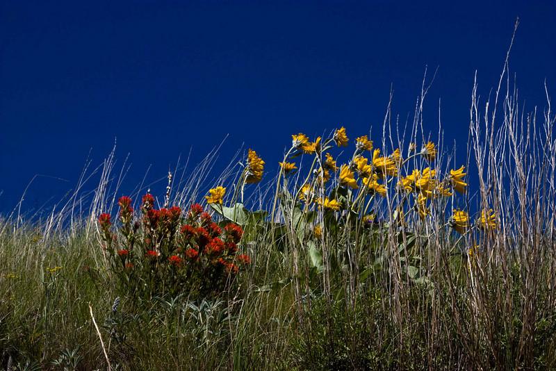 Height of summer in the Wallowa Mts - Oregon.<br /> Photo © Carl Clark