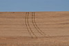 Tracks on the wheat fields near Condon, Oregon.<br /> Photo © Carl Clark