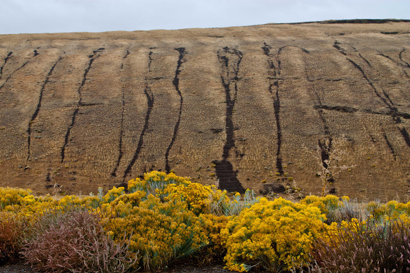 Foliage and lines in the hills east of Heppner, Oregon.<br /> Photo © Carl Clark