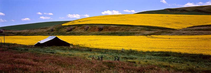Mustard spread on the hills near Dayton, Washington.<br /> Photo © Carl Clark
