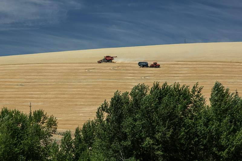 Summer wheat harvest in progress in The Palouse in eastern Washington.<br /> Photo © Carl Clark