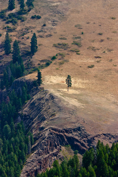 A lone tree on the grass slopes of Hell's Canyon.<br /> Photo © Carl Clark