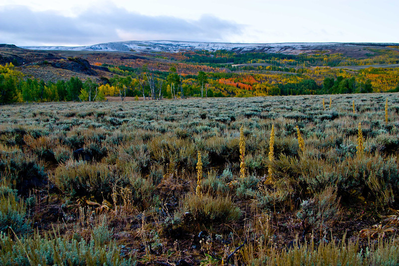 Late summer brings early autumn colors to the flanks of Steens Mt - Oregon.<br /> Photo © Carl Clark