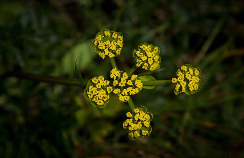 We found very diverse wildflowers on the Zumwalt Prairie.<br /> Photo © Cindy Clark
