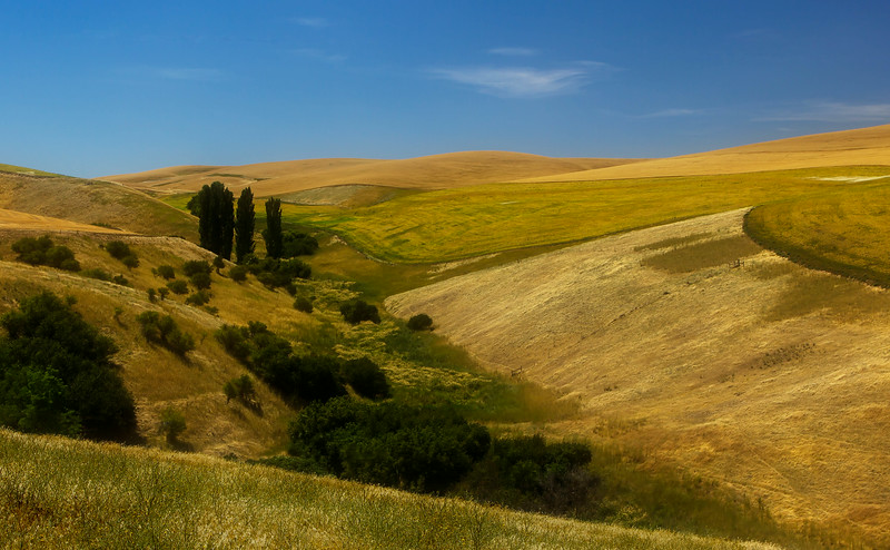 These lovely hills are in the area of eastern Washington known as the Palouse.<br /> Photo © Cindy Clark