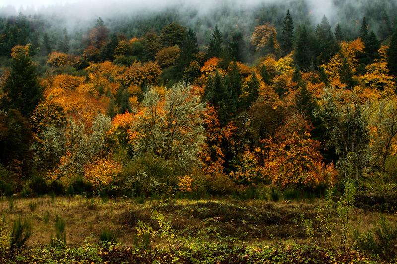 Late October in Oregon, southwest of Eugene.<br /> Photo © Cindy Clark