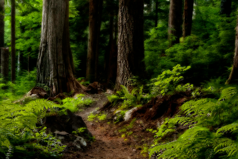 Once upon a time . . . Beautiful woodland hike at the beginning of Perry Creek trail.<br /> Photo © Cindy Clark
