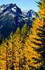 Buck Mt framed by the larches on Carne Mt.<br /> Photo © Carl Clark