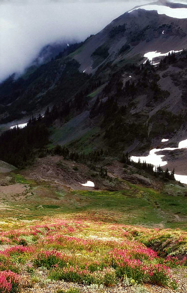 Wildflowers bloom beneath a moody sky in the Olympic Mountains.<br /> Photo © Cindy Clark