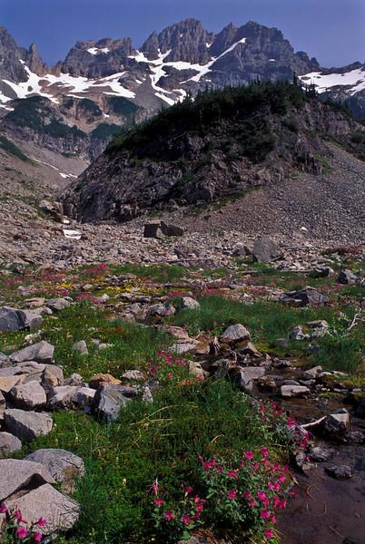 Monte Cristo Peak above the flowers of Glacier Basin - Washington Cascades.<br /> Photo © Carl Clark