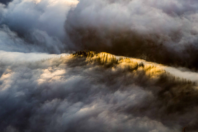 Morning fog on the forest below the summit of Mt Townsend in the Olympic Mountains.<br /> Photo © Carl Clark
