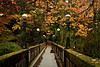 The Wilcox footbridge leads to Seattle's Arboretum, a spectacular place in autumn.<br /> Photo © Cindy Clark
