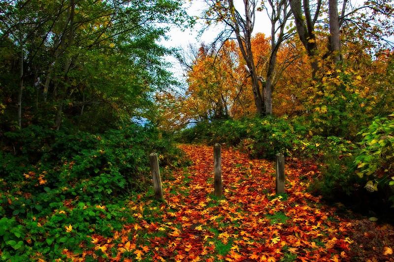 Fallen leaves soften a trail along my morning walk in Mukilteo.<br /> Photo © Carl Clark