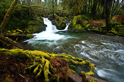 Quinault Rain Forest, Olympic National Park, Washington. 奎納爾特雨林,奧林匹克國家公園,華盛頓州