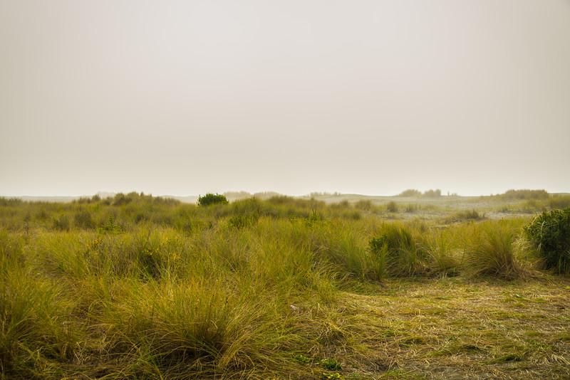 Fog & Beach Grass
