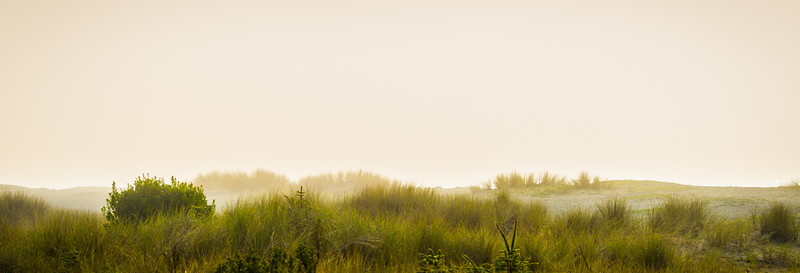 Fog & Beach Grass