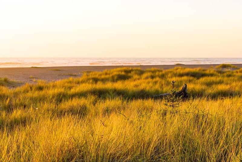 Sunset & Beach Grass