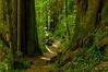 Hobbits Path