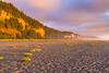 Sunset Beach Flora