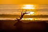 Elk Silhouette | Beach Sunset