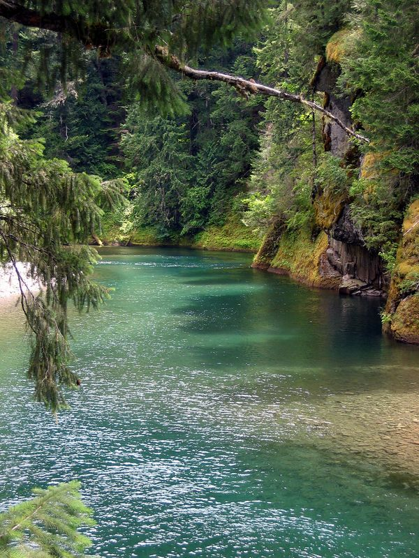 clear fork of the cowlitz