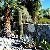 Cactus in Palm Springs 3