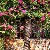 Spring Flowers in Palm Springs California 200