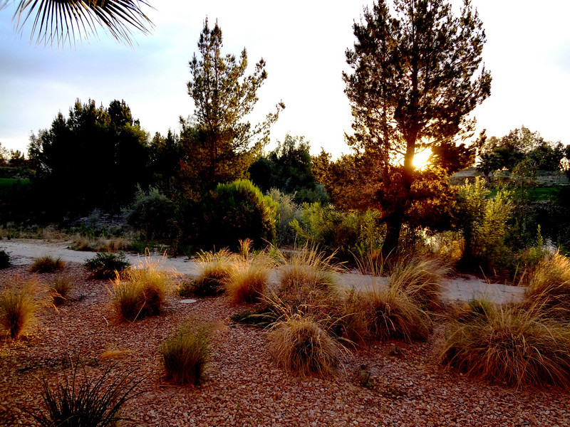 Desert Colors in the morning in Palm Springs