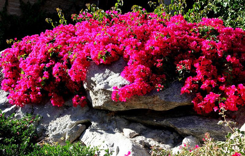 Spring in Palm Springs