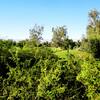 Nick Faldo Golf Course at Marriott Shadow Ridge in Palm Springs 3