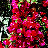 Flowers in Palm Springs CA