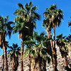 Tahquitz Canyon near Palm Springs, CA