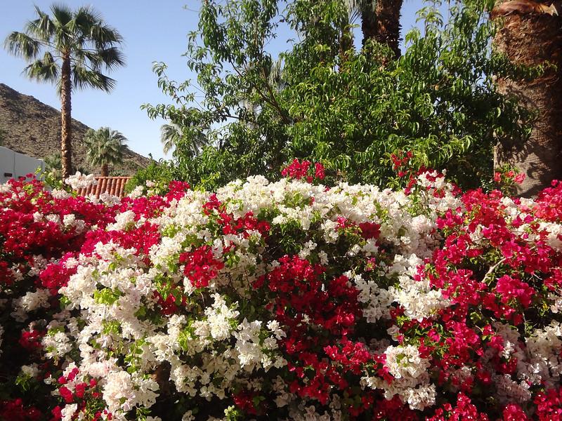 Palm Springs Neighborhood in the Springtime