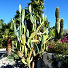 Cactus in Palm Springs 2