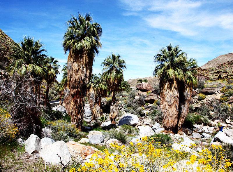 Indian Canyon in Palm Springs 5